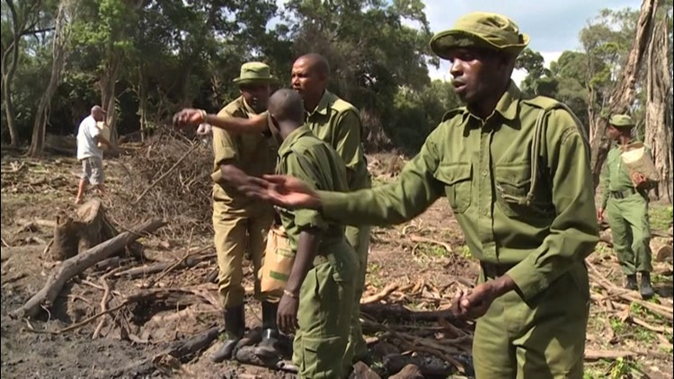 'Seedballs' giving Kenya's forests a fighting chance