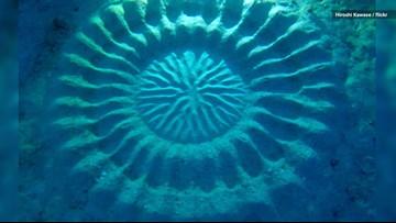 What's Behind These Ocean Floor Crop Circles?