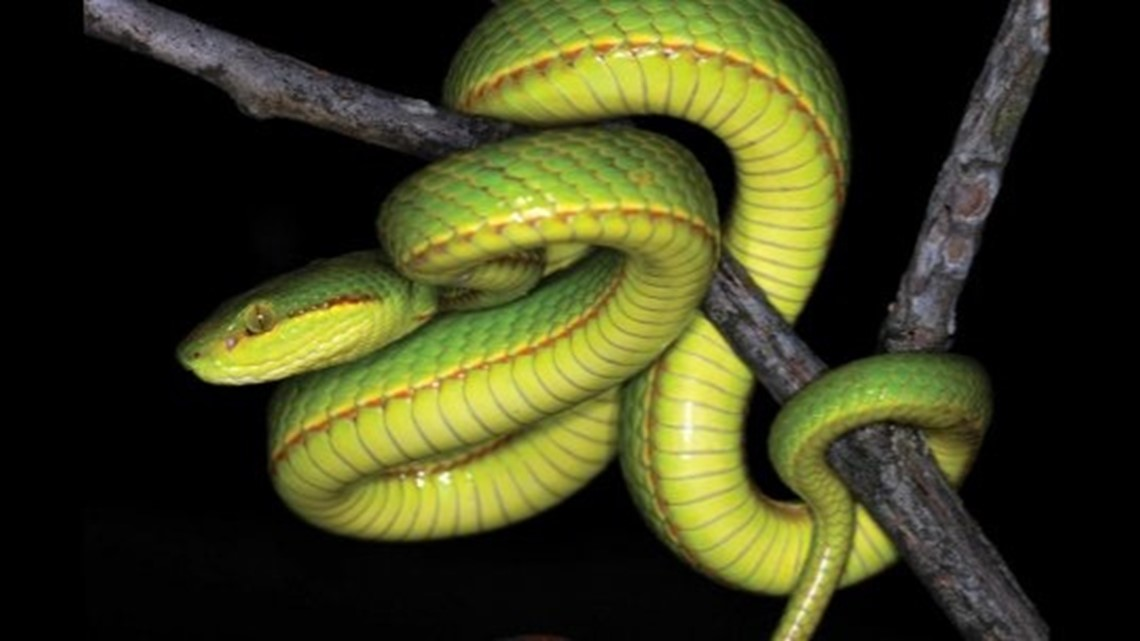 This Snake Species Is Named After a Very Important Harry Potter Character