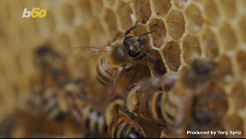 Scientists Develop World's First 'Walkie Talkie' for Bees and Fish