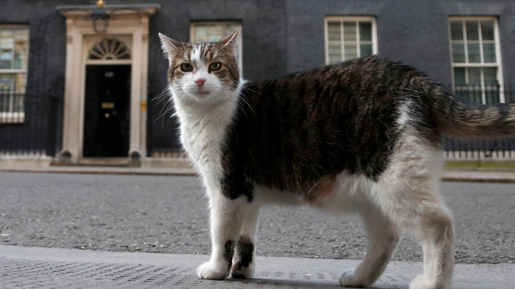 Larry the cat, UK's chief mouser, celebrates 10 years on the prowl