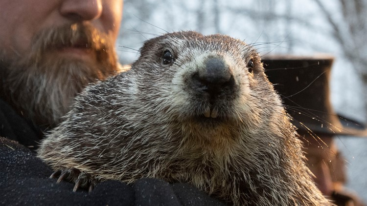 Punxsutawney Phil says there will be 6 more weeks of winter