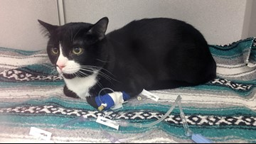 Minnesota cat survives wash cycle