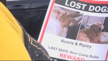 San Antonio couple grows desperate to find missing golden retrievers