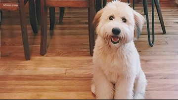 Houston family looking for answers after their dog died while in care of dog walker