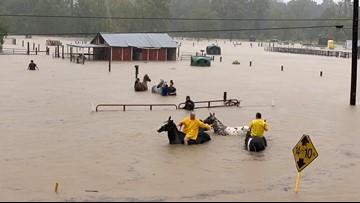 Video: More than 50 horses trapped in chest-deep floodwaters in Humble rescued by volunteers