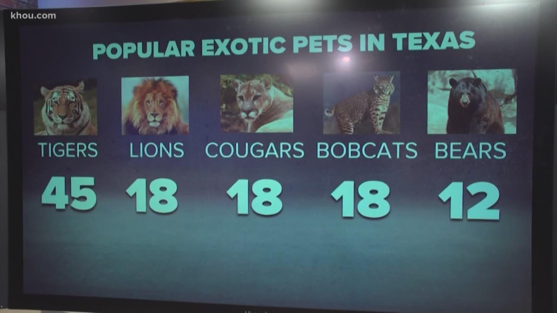 Popular Exotic Pets In Texas Kvue Com