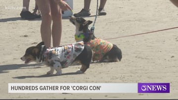 Corgi owners unite in Corpus Christi