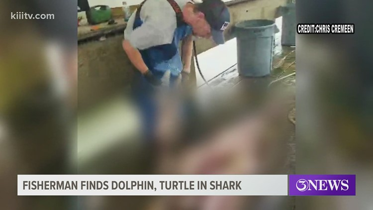 Fish cleaner finds dolphin, turtle inside a shark in Port Aransas