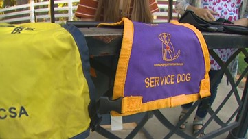 VERIFY: What are the rules for service dog vests?