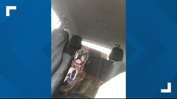 Lost dog to be reunited with owner after going missing a year-and-a-half ago