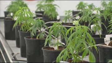 How the Texas hemp law has impacted marijuana prosecutions – breakdown by county