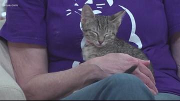 Pet of the Week: Meet Lindor, KitKat, Twix and Caramello