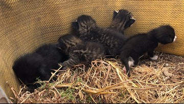 The purr-fect rescue: Austin firefighters save 5 kittens