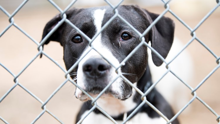 PHOTOS: Animals looking for homes at Austin Animal Center