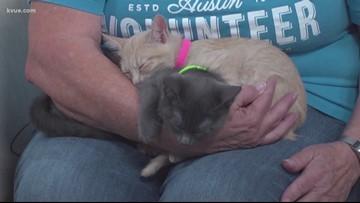 Pet of the week: Kittens Alice, Taz, Sylvester, Alvin, Reyna