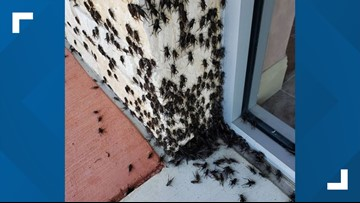 'I'm a bit terrified': Austinites take to social media as crickets invade homes, businesses