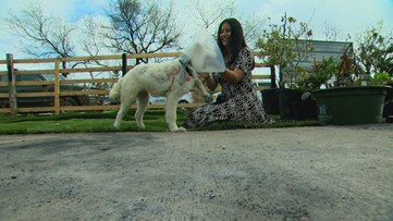 In Other News: Strangers help with veterinary bills after dog injured in house fire