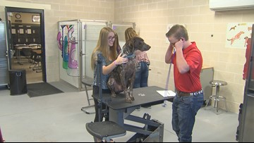 Liberty Hill HS students with dreams of becoming veterinarians get head start with vet program