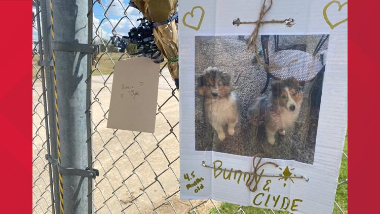 'Extremely heart wrenching'   75 dogs killed in fire at Ponderosa Pet Resort in Georgetown