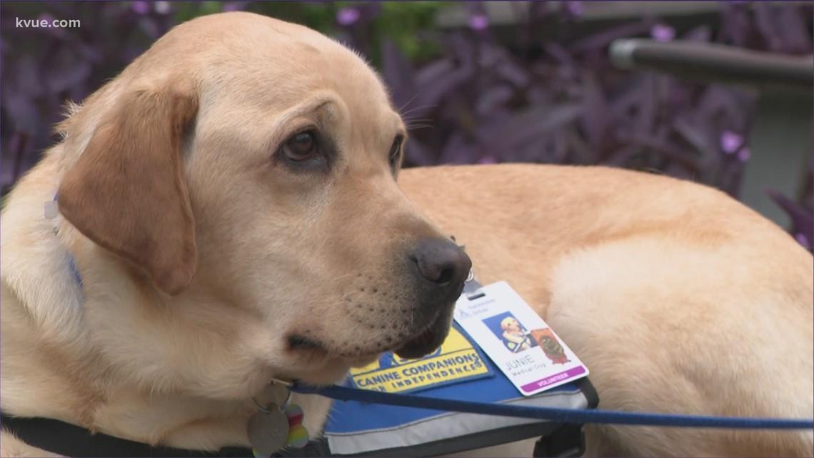 Dell Children's Austin launches medical dog program 'emBark!'