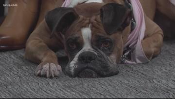 Pet of the Week: Meet Boxy