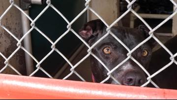 Austin Pets Alive! in desperate need of fosters and adoptions amid coronavirus concerns