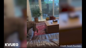 VIDEO: Drum the dog FaceTimes with owner after over a year