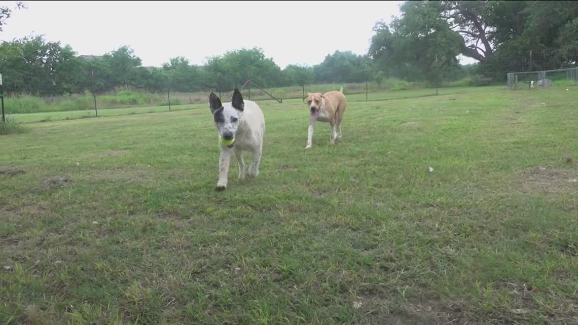 Pet of the Week: Meet Jett and Cookie