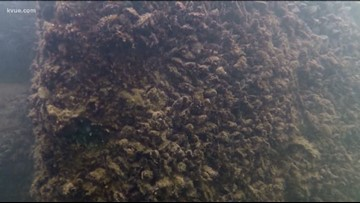 Travis County park officials warn about zebra mussels