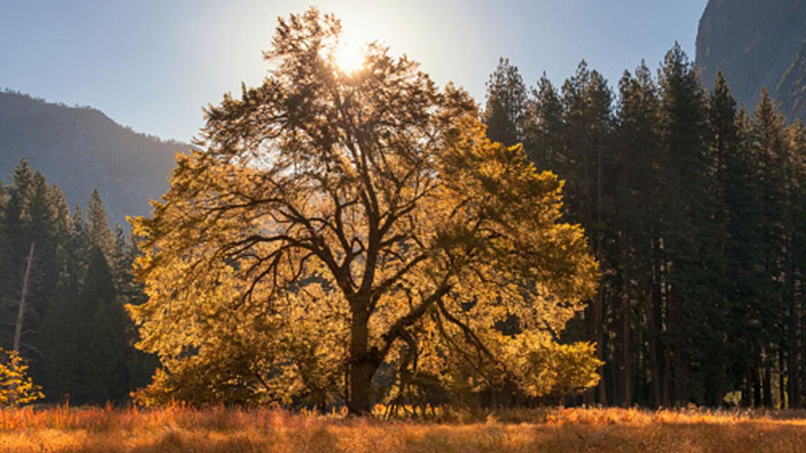 As cedar season nears its end, elm pollen season arrives in Central Texas