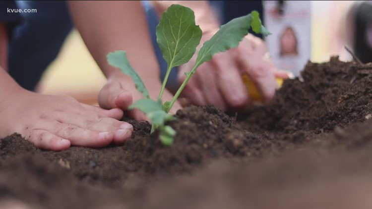 School gardens are a big hit in Central Texas