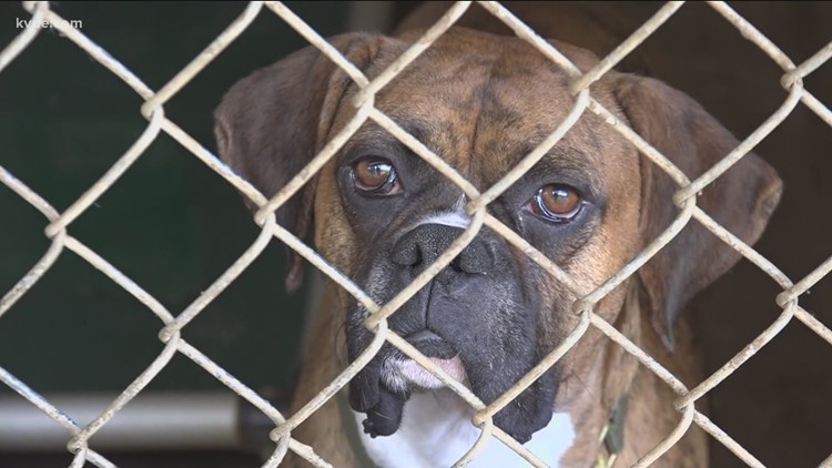 Austin Pets Alive! needs dog fosters as they fear kennels could flood