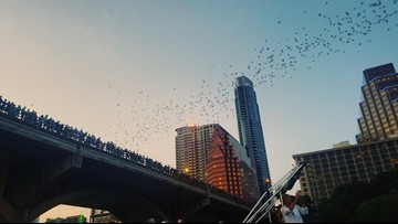 Experts say bats are sticking around Austin longer than they used to