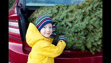 Texans buy the most expensive Christmas trees in U.S., study says