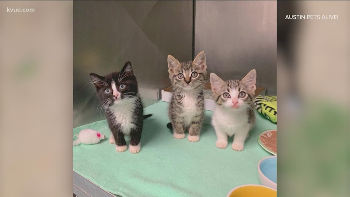 Austin Pets Alive! seeking fosters as it takes in evacuated animals from Louisiana