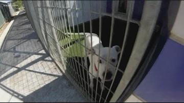 Austin Animal Center offering $5 adoptions