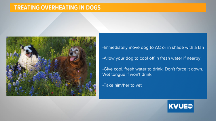 treating overheating in dogs