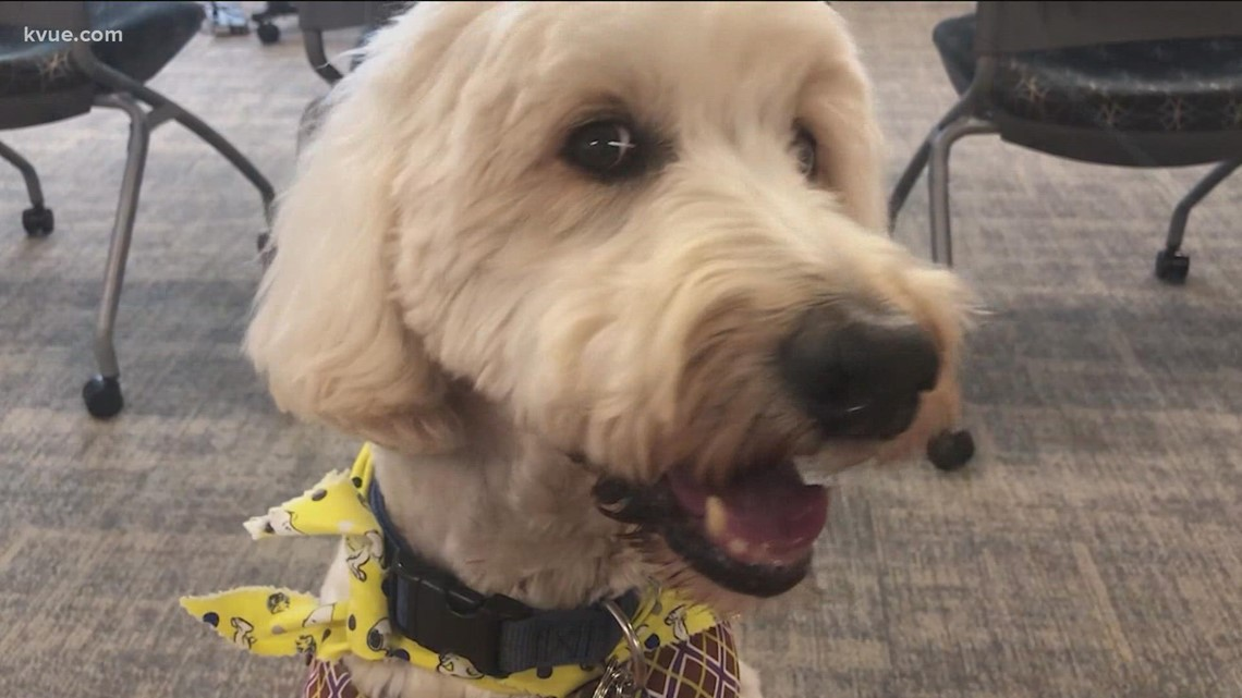 Therapy dogs visit St. David's in Georgetown