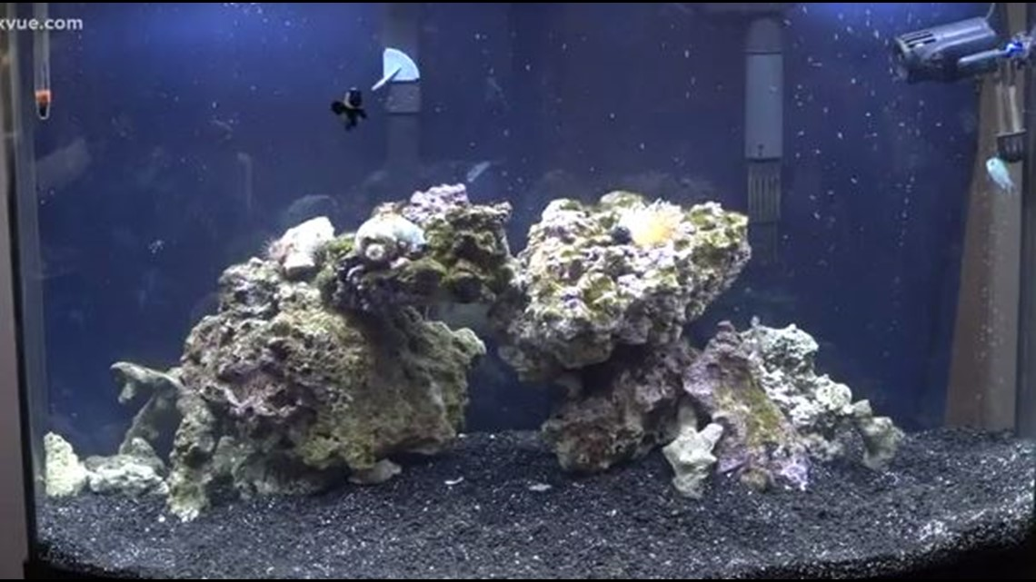 cedar park mother warning others after aquarium coral nearly kills