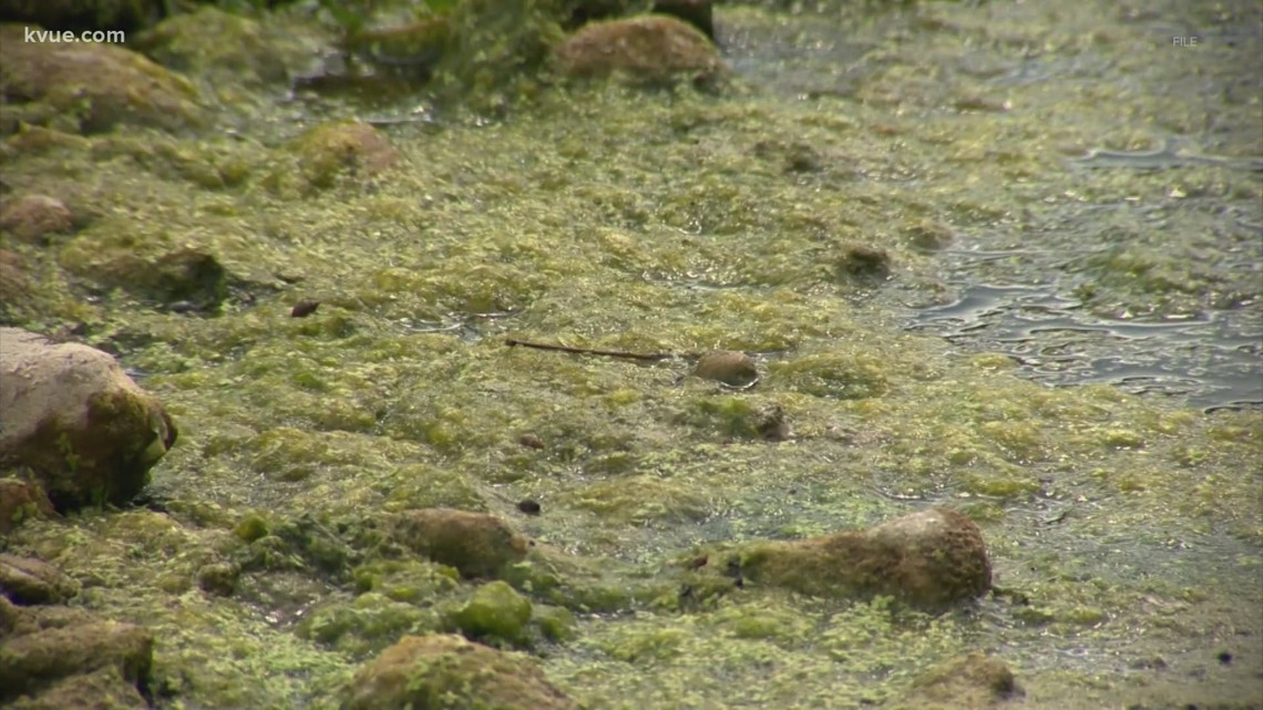 Defenders: Toxic algae may be a side effect of development