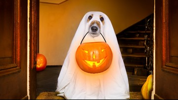 Keep your furry friends free from fright this Halloween!