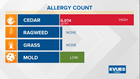 Second highest cedar pollen count of the season recorded in Austin