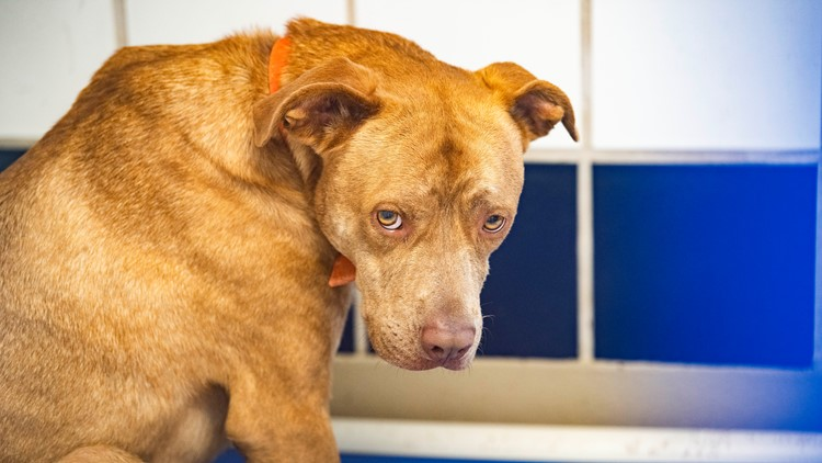 Austin Animal Center in desperate need of adoptions, fees waived