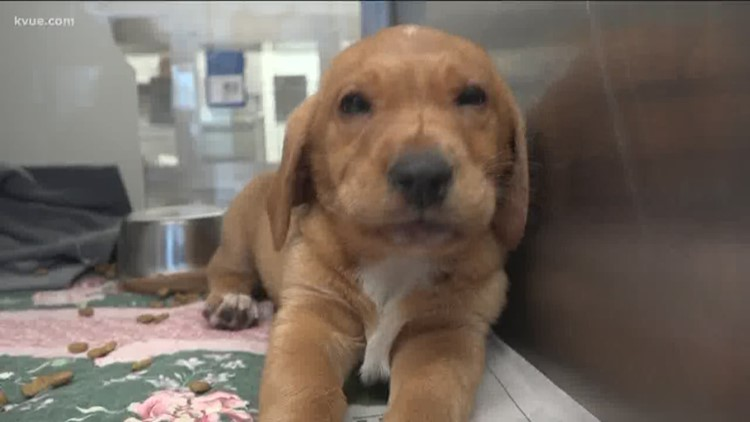 $5 foot long adoptions are back at Austin Animal Center