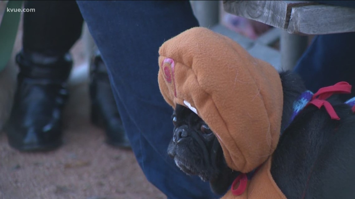 Pug-ly Christmas Sweater Party held to raise money for Pug Rescue of Austin