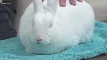 Pet of the Week: Meet 'Turtle' the rabbit
