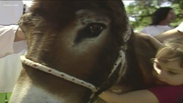 Eeyore's Birthday: A 57-year Austin tradition that honors a sad little donkey