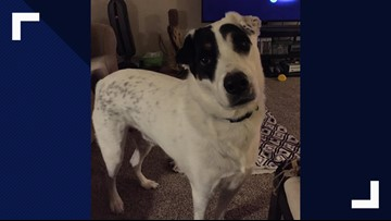 Dog survives deadly Liberty Hill crash; family now looking for him