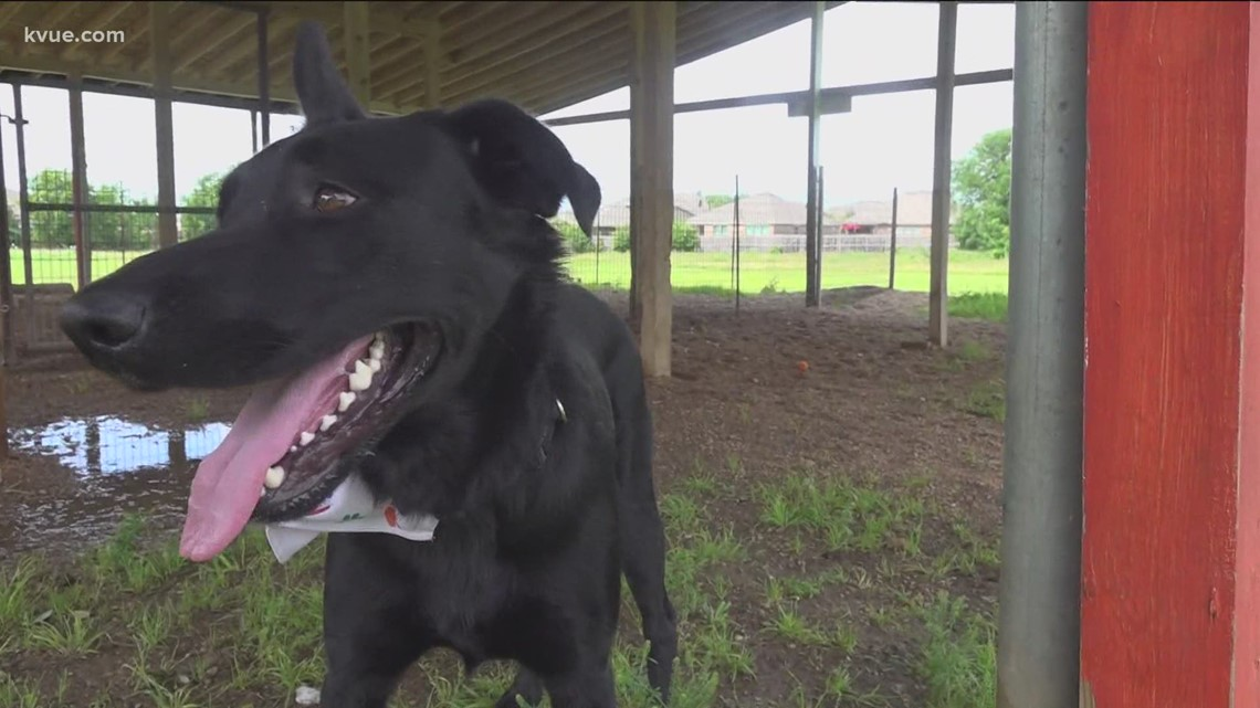 Pet of the Week: Meet Shady, your next running companion